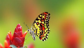 Nice_Butterfly_on_Flower_HD_Wallpaper